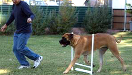 Obstacle Course Canine Rehab